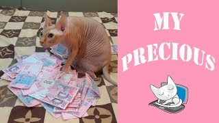 Funny Sphynx Cats Love and Protect Money | Top Cats Video
