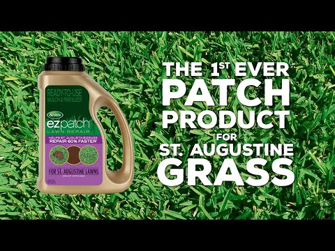 The 1st Ever Patch Product for St. Augustine Grass