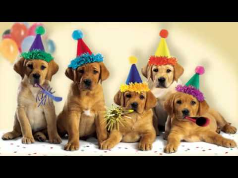 Cute Dogs Bark The Quot Happy Birthday Quot Song Youtube