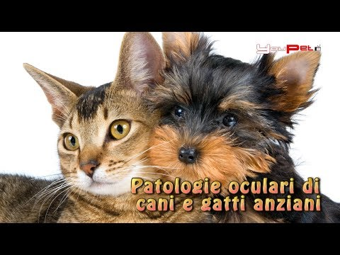 Patologie oculari di cani e gatti anziani