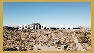 alone in JOSHUA TREE.