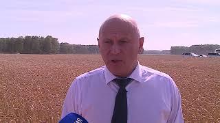 Омские аграрии убрали уже больше половины намеченного урожая зерна