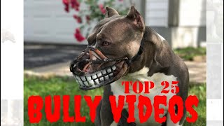 Top 25 Best of American Bully Videos Vol.2