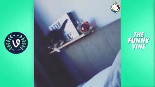 YOU LAUGH YOU LOSE - FUNNY CATS COMPILATION . BEST FUNNY CAT VIDEOS EVER ¦¦ FUNNY VINES.