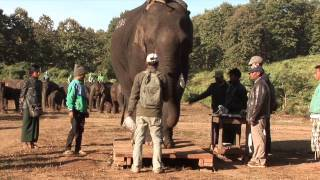 Improving animal welfare with the government in Burma