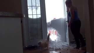 Снегопад в США, жирный кот и его стройная хозяйка