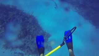サメに襲われかける