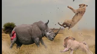 Top 10 Animal fights for territory and hunting in nature