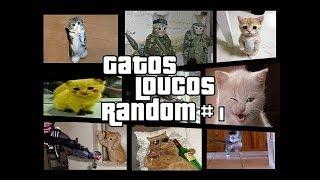 Gatos engraçados e Loucos Random #1   Funny and Crazy Cats