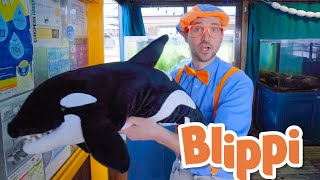 Blippi Learns About Sea Creatures! | Learn About Animals For Kids | Educational Videos For Toddlers