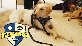 Puppy Prep • The Puppies Have Their Final Test