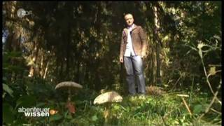 Abenteuer Wissen - Pilze