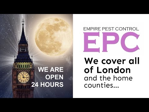 WHY 24 HOUR PEST CONTROL IS SO EFFECTIVE | EMPIRE PEST CONTROL LONDON