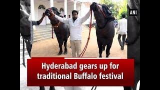 Hyderabad gears up for traditional Buffalo festival 'Sadar..