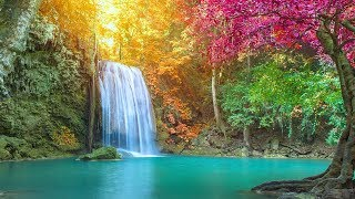🔴 Peaceful Relaxing Music LIVE 24/7: Music for Deep Sleep. Music for Spa, Massage, Meditation
