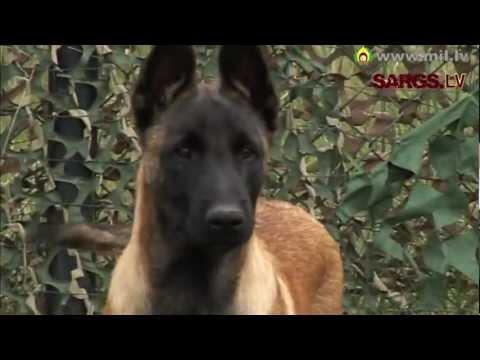Speciālo uzdevumu vienības kinologs: Dienesta laikā suns ir kolēģis 1. daļa