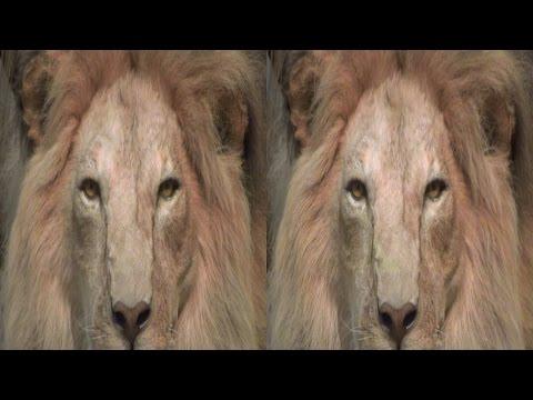 3D - Bonn - Zoological Museum Koenig - YT3D