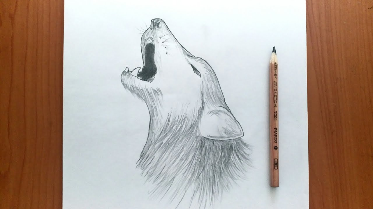 How To Draw A Really Cool Wolf