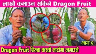 लाखौ कमाउन सकिने dragon fruit को खेति गर्ने तरिका कस्तो माटोमा राम्रो हुन्छ   dragon fruit in Nepal