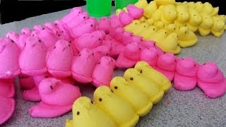 The 100 Peeps Challenge - Destroyed