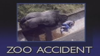The Urban Gorilla - Child falls into gorilla pit at zoo
