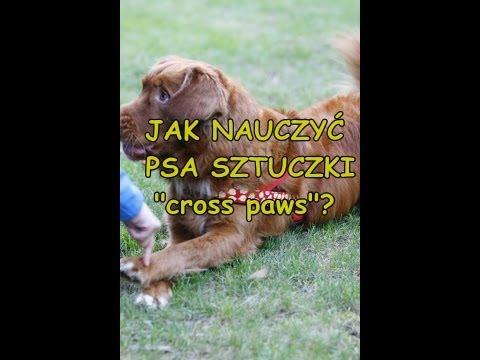 """Jak nauczyć psa sztuczki """"cross paws"""""""