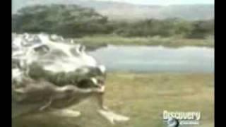 ワニVSライオン1