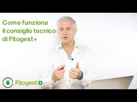 Come funziona il consiglio tecnico di Fitogest+
