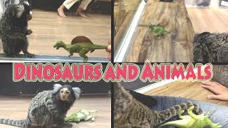 Funny Dinosaurs For Kids | Dinosaur and Animal Attack For Fun