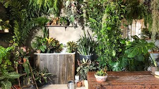 Houseplant tour of the workshop.  Plant styling with easy care indoor plants.