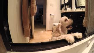 The Daily Shower Routine with Gus