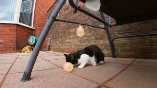 Cat Vs Water Balloon   4K Ultra Hd 60fps   GoPro Hero 7 Black
