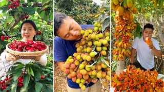 Awesome Cutting Fruit on The Tree | Amazing Fruits Cutting Skills