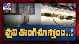 Leopard again caught on CCTV camera in Hyderabad..