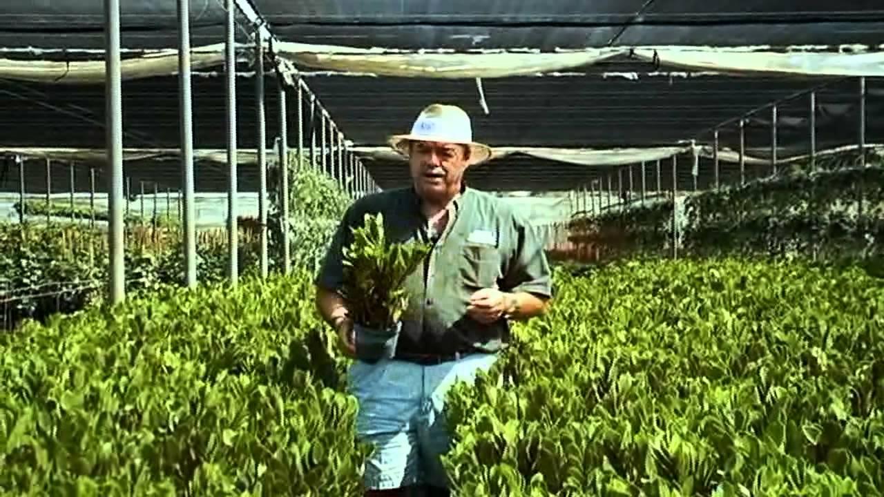 Zz Plant Care Instructions Avi Youtube