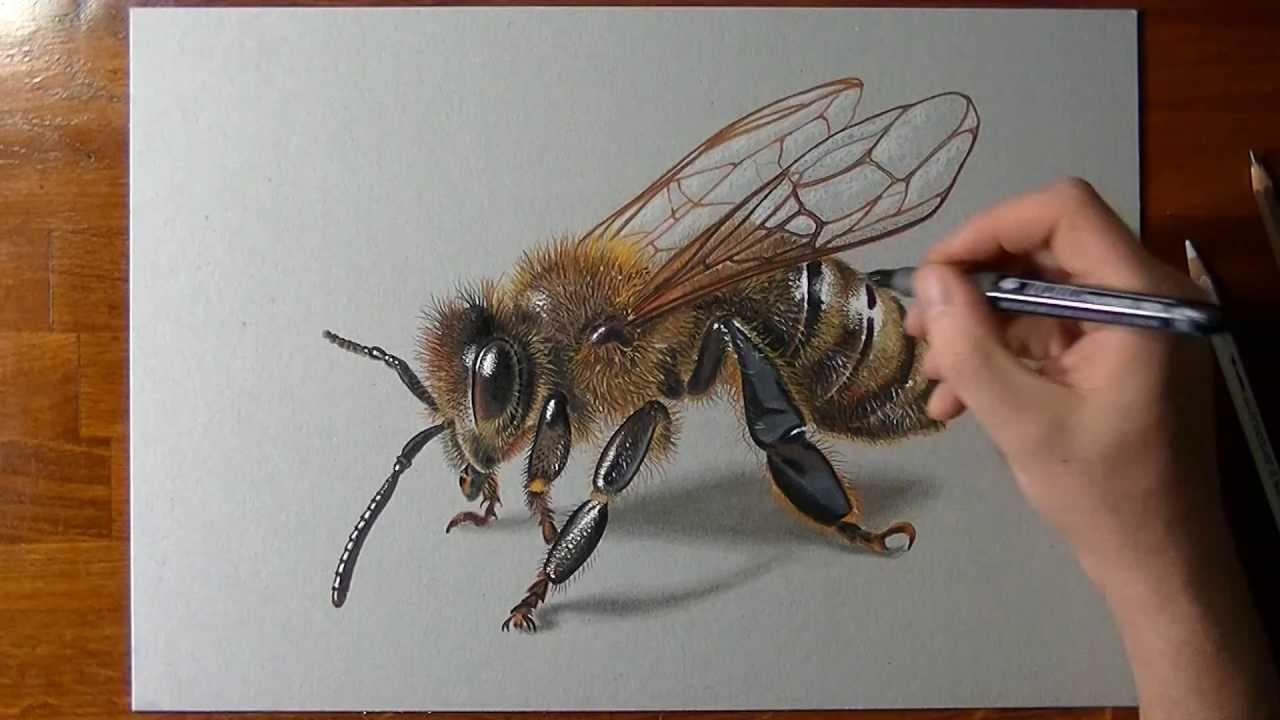 Comment dessiner une abeille ?