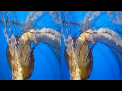 Jellyfish 3D (YT3D:Enable=True)