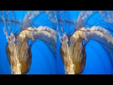 Jellyfish 3D (YT3D:Enable=True)