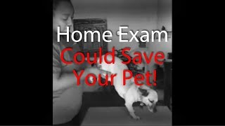 Ask.Vet u2013 This Home Exam Could Save Your Pet's Life