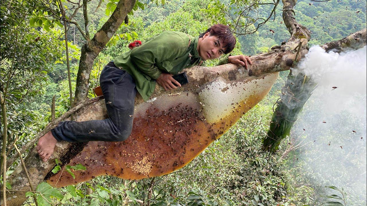 Bắt tổ ong rừng