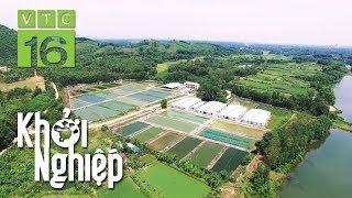 Khởi nghiệp từ nông nghiệp với số vốn 300 triệu | Khởi nghiệp 493 | VTC16