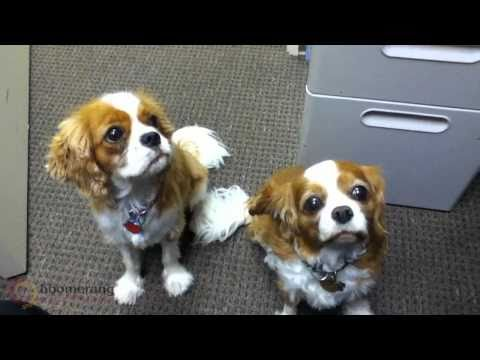 Boomerang Email Marketing: The Office Dogs