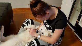 PRANK! Dog reaction to crying and dying owner !