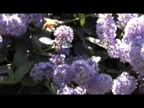 Miel De Abejas Organica Ma-Honey 100% Pura Miel - Magazine cover