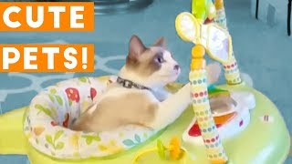 Cutest Pets of the Week Compilation April 2018   Funny Pet Videos