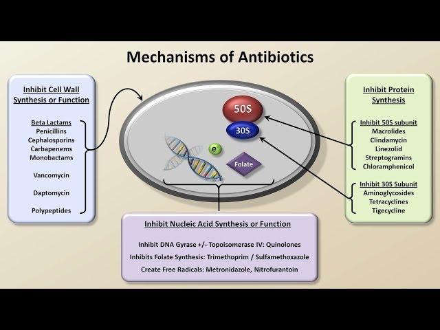 Quinolones antibiotics related keywords amp suggestions quinolones