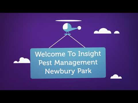 Insight Pest Management - Termite Inspection in Camarillo, CA