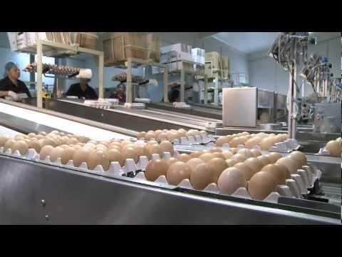Poultry Farm Egg Production Business - Business For Sale, Gippsland, Victoria; Australia