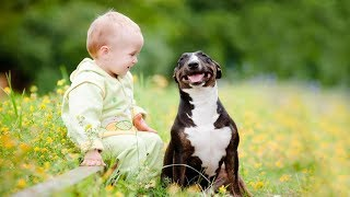 Best babies laughing hysterically at dogs   Funny Animal vs Baby Compilation