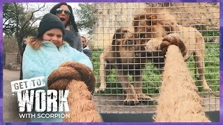 Tug of War with Lions 🦁 - Massage Heights - Scorpion Studios